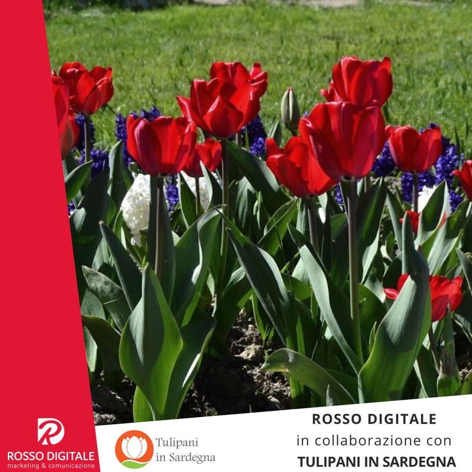 RossoDigitale e Tulipani in Sardegna, edizione 2020